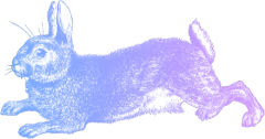 5 rabbit