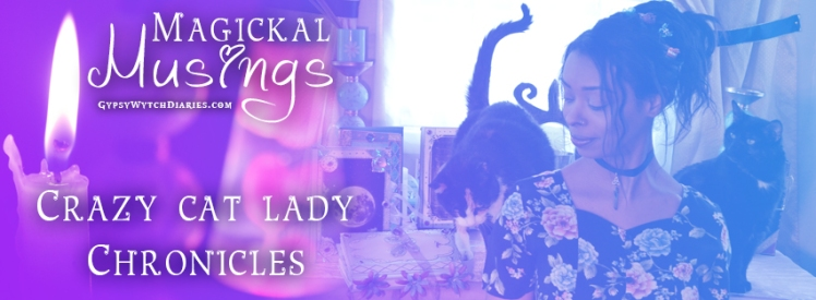 crazy cat lady chronices banner