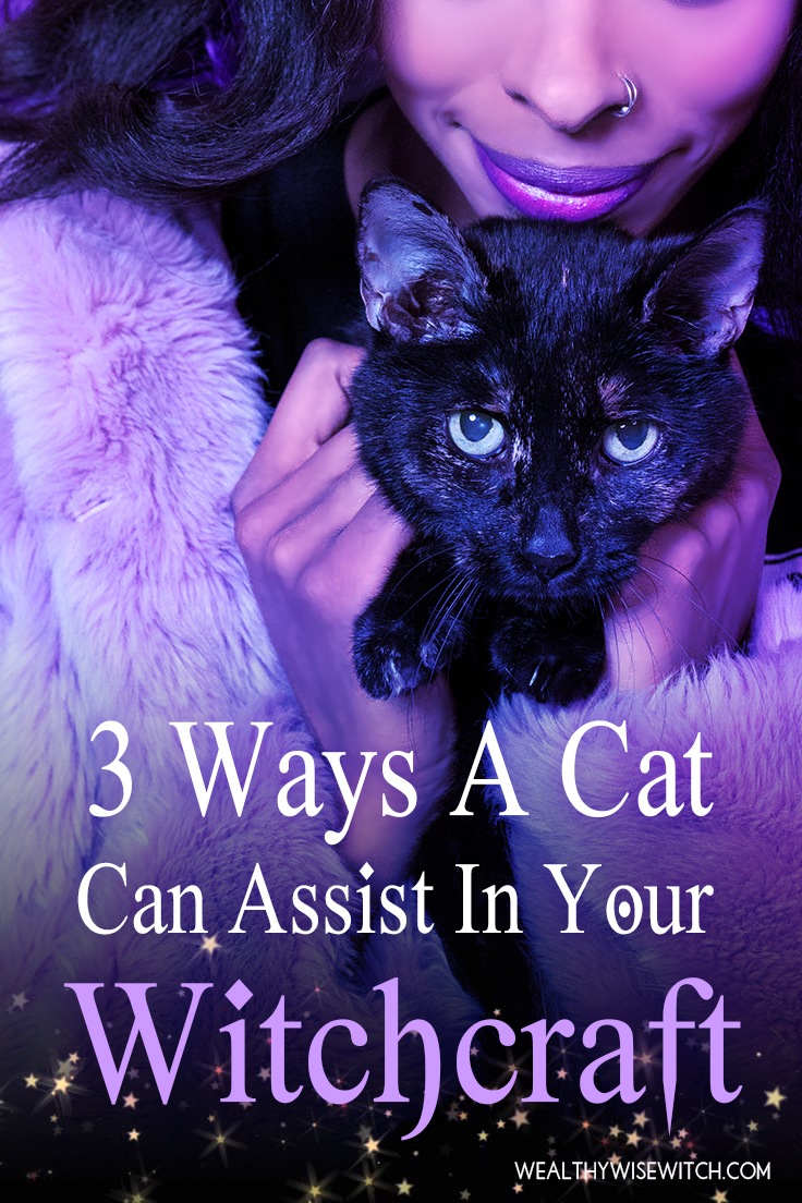 3 ways a cat pinterest